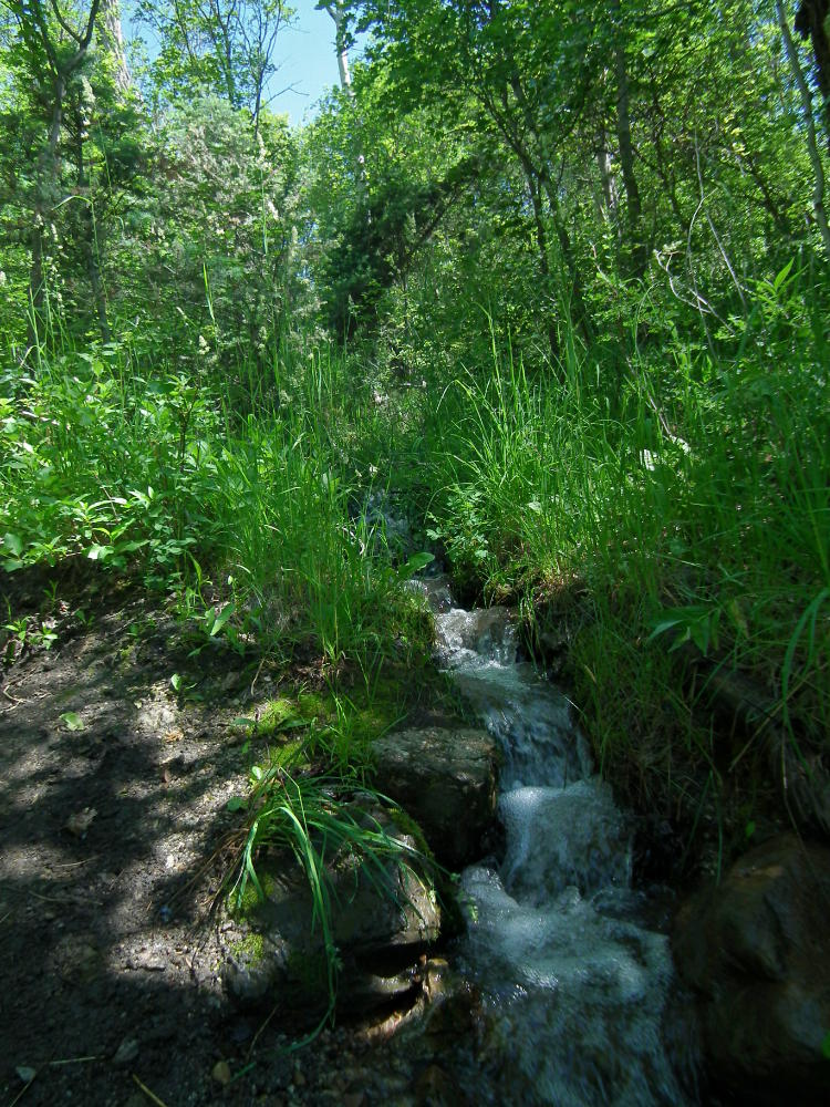 There was a little stream that crossed the trail a few times.